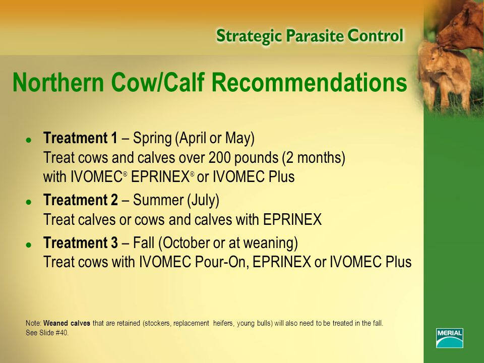 Northern Cow/Calf Recommendations l Treatment 1 – Spring (April or May) Treat cows and calves over 200 pounds (2 months) with IVOMEC ® EPRINEX ® or IVOMEC Plus l Treatment 2 – Summer (July) Treat calves or cows and calves with EPRINEX l Treatment 3 – Fall (October or at weaning) Treat cows with IVOMEC Pour-On, EPRINEX or IVOMEC Plus Note: Weaned calves that are retained (stockers, replacement heifers, young bulls) will also need to be treated in the fall.