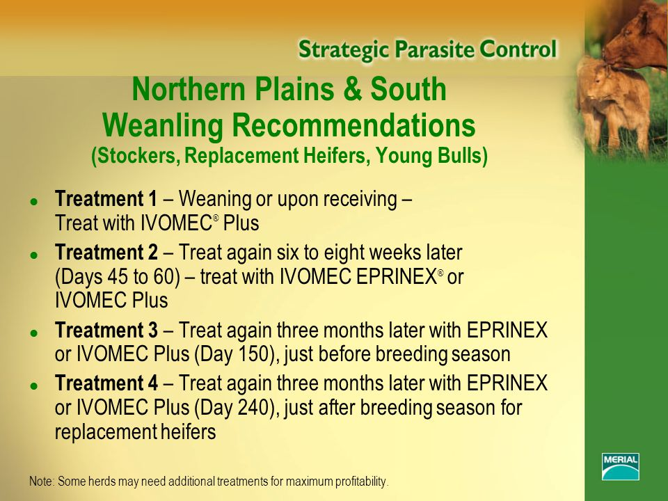 Northern Plains & South Weanling Recommendations (Stockers, Replacement Heifers, Young Bulls) l Treatment 1 – Weaning or upon receiving – Treat with IVOMEC ® Plus l Treatment 2 – Treat again six to eight weeks later (Days 45 to 60) – treat with IVOMEC EPRINEX ® or IVOMEC Plus l Treatment 3 – Treat again three months later with EPRINEX or IVOMEC Plus (Day 150), just before breeding season l Treatment 4 – Treat again three months later with EPRINEX or IVOMEC Plus (Day 240), just after breeding season for replacement heifers Note: Some herds may need additional treatments for maximum profitability.