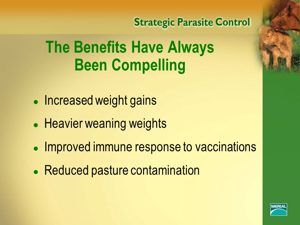 The Benefits Have Always Been Compelling l Increased weight gains l Heavier weaning weights l Improved immune response to vaccinations l Reduced pasture contamination