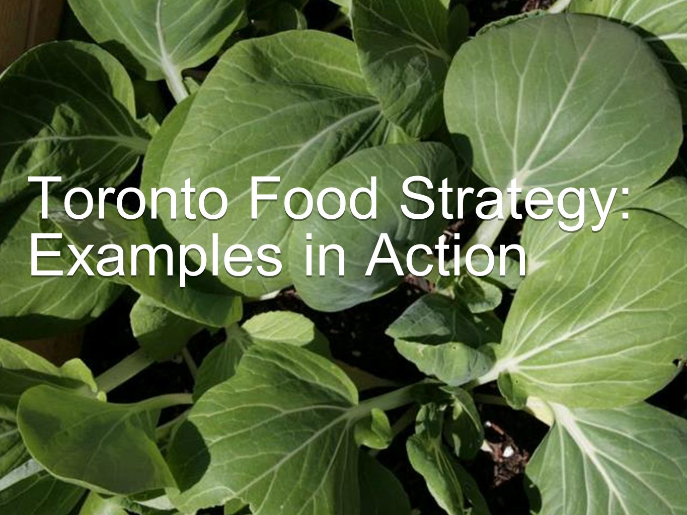 Toronto Food Strategy: Examples in Action