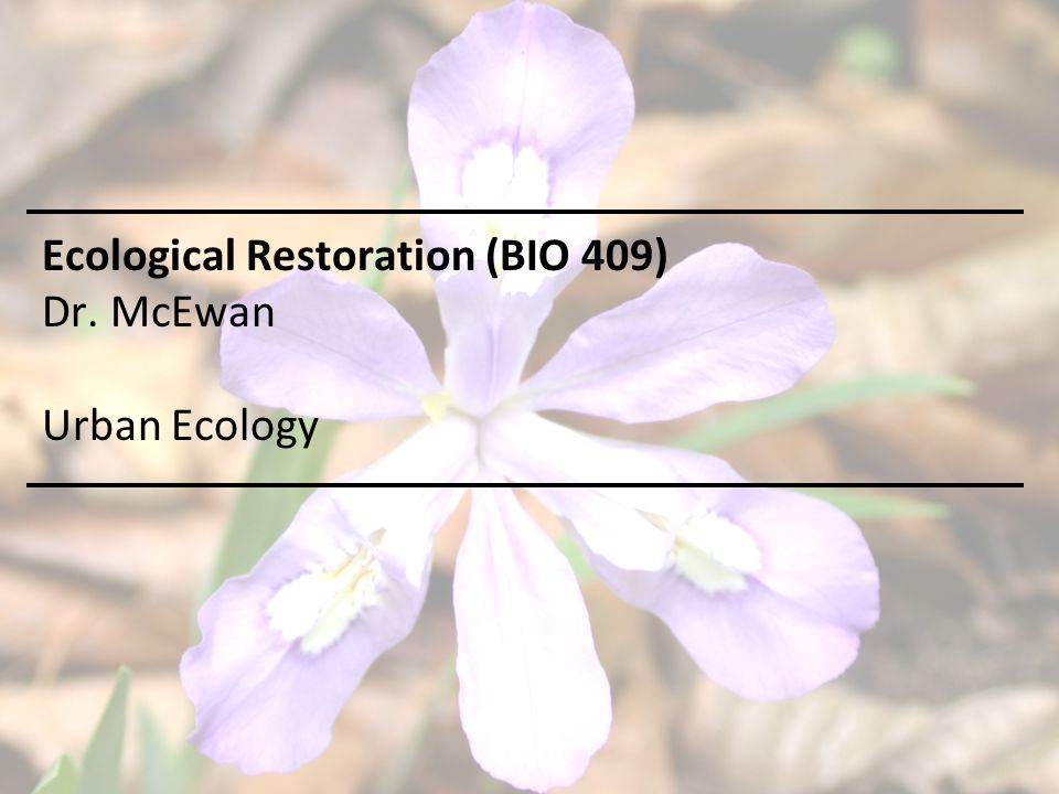 Ecological Restoration (BIO 409) Dr. McEwan Urban Ecology
