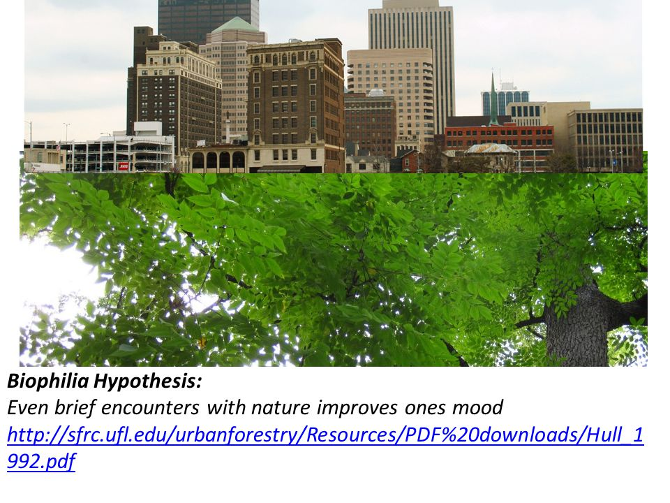 Biophilia Hypothesis: Even brief encounters with nature improves ones mood http://sfrc.ufl.edu/urbanforestry/Resources/PDF%20downloads/Hull_1 992.pdf