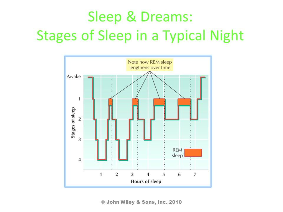 Sleep & Dreams: Stages of Sleep in a Typical Night © John Wiley & Sons, Inc. 2010