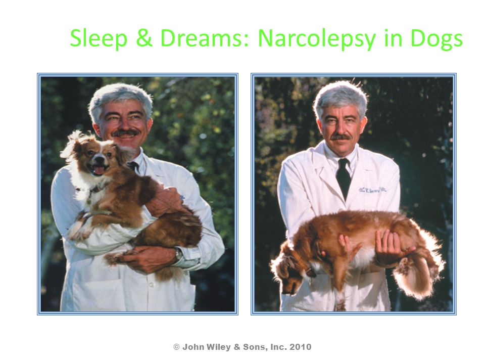 Sleep & Dreams: Narcolepsy in Dogs © John Wiley & Sons, Inc. 2010