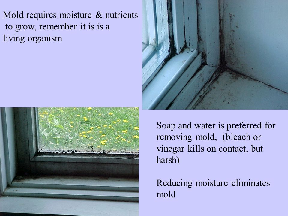 Mold requires moisture & nutrients to grow, remember it is is a living organism Soap and water is preferred for removing mold, (bleach or vinegar kills on contact, but harsh) Reducing moisture eliminates mold
