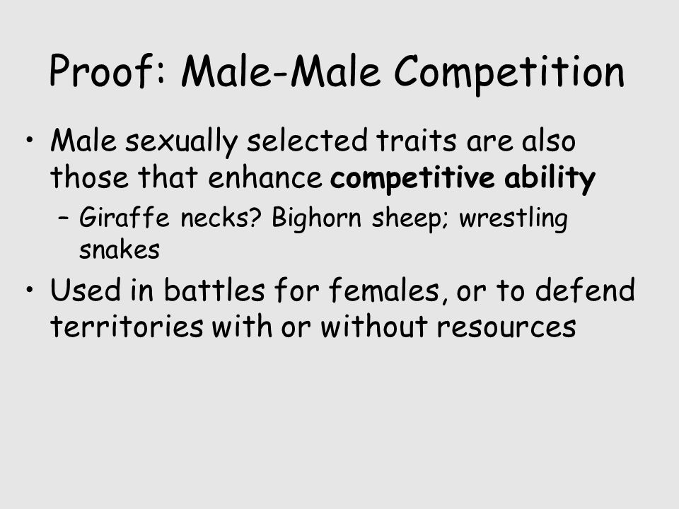 Proof: Male-Male Competition Male sexually selected traits are also those that enhance competitive ability –Giraffe necks? Bighorn sheep; wrestling sn