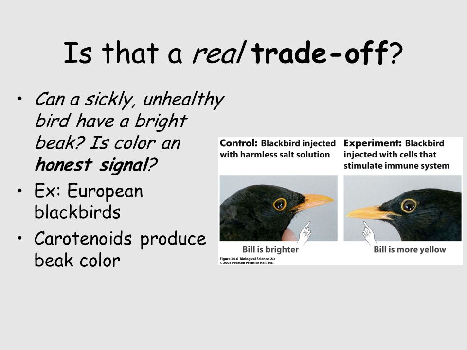 Is that a real trade-off. Can a sickly, unhealthy bird have a bright beak.
