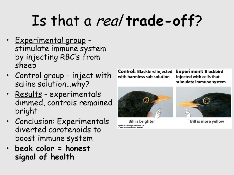 Is that a real trade-off? Experimental group - stimulate immune system by injecting RBC's from sheep Control group - inject with saline solution…why?