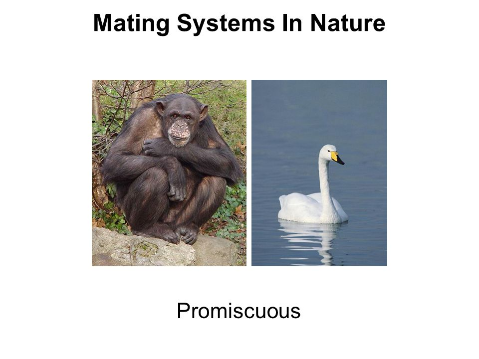 Promiscuous Mating Systems In Nature