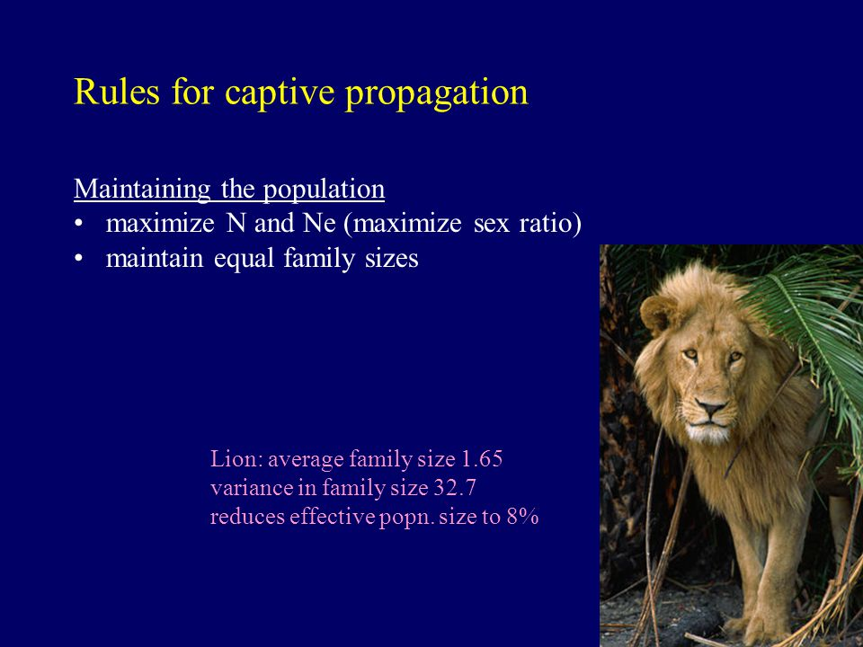 Rules for captive propagation Maintaining the population maximize N and Ne (maximize sex ratio) maintain equal family sizes Lion: average family size 1.65 variance in family size 32.7 reduces effective popn.