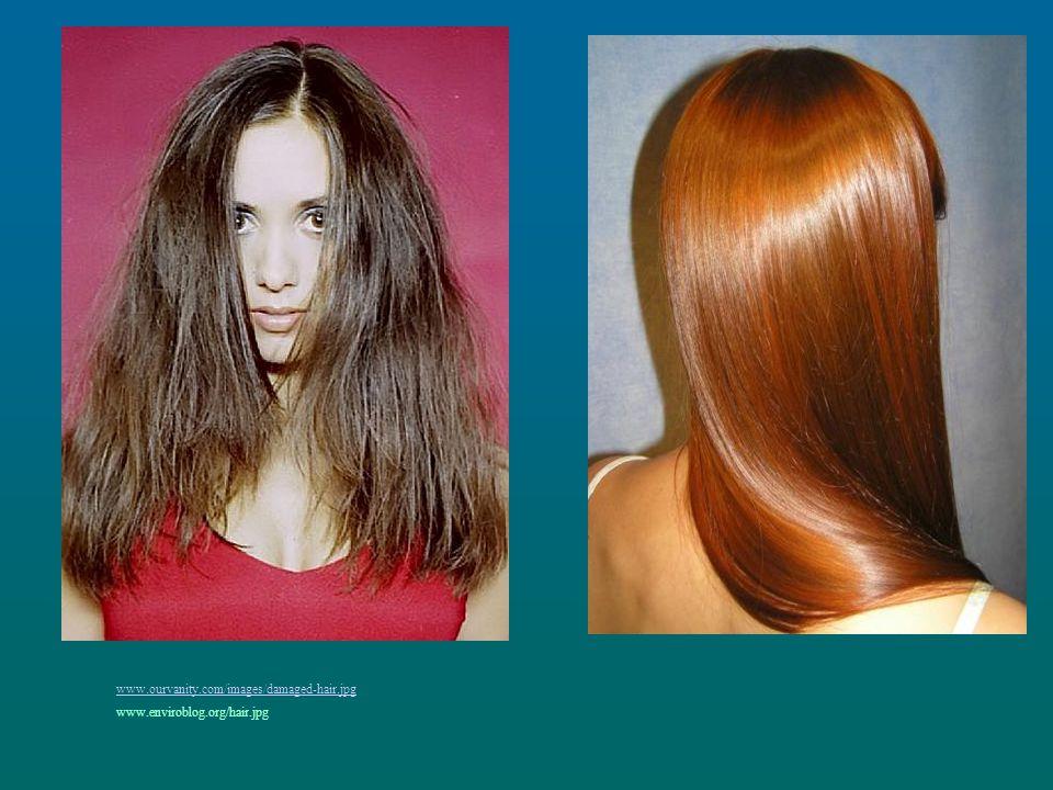 www.ourvanity.com/images/damaged-hair.jpg www.enviroblog.org/hair.jpg