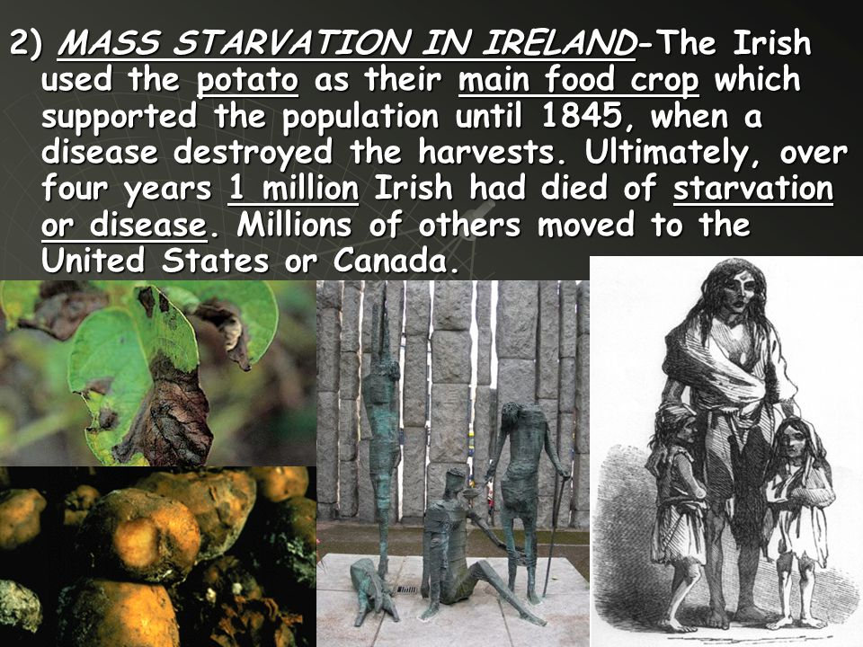 2) MASS STARVATION IN IRELAND-The Irish used the potato as their main food crop which supported the population until 1845, when a disease destroyed the harvests.