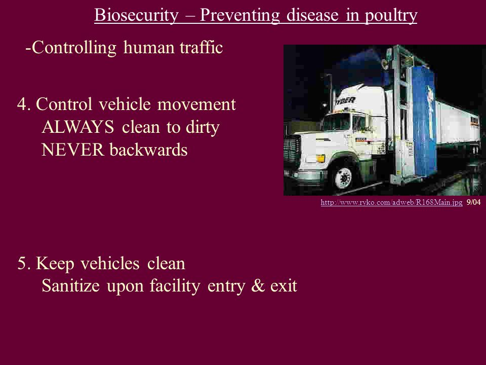 Biosecurity – Preventing disease in poultry -Controlling human traffic 4. Control vehicle movement ALWAYS clean to dirty NEVER backwards 5. Keep vehic