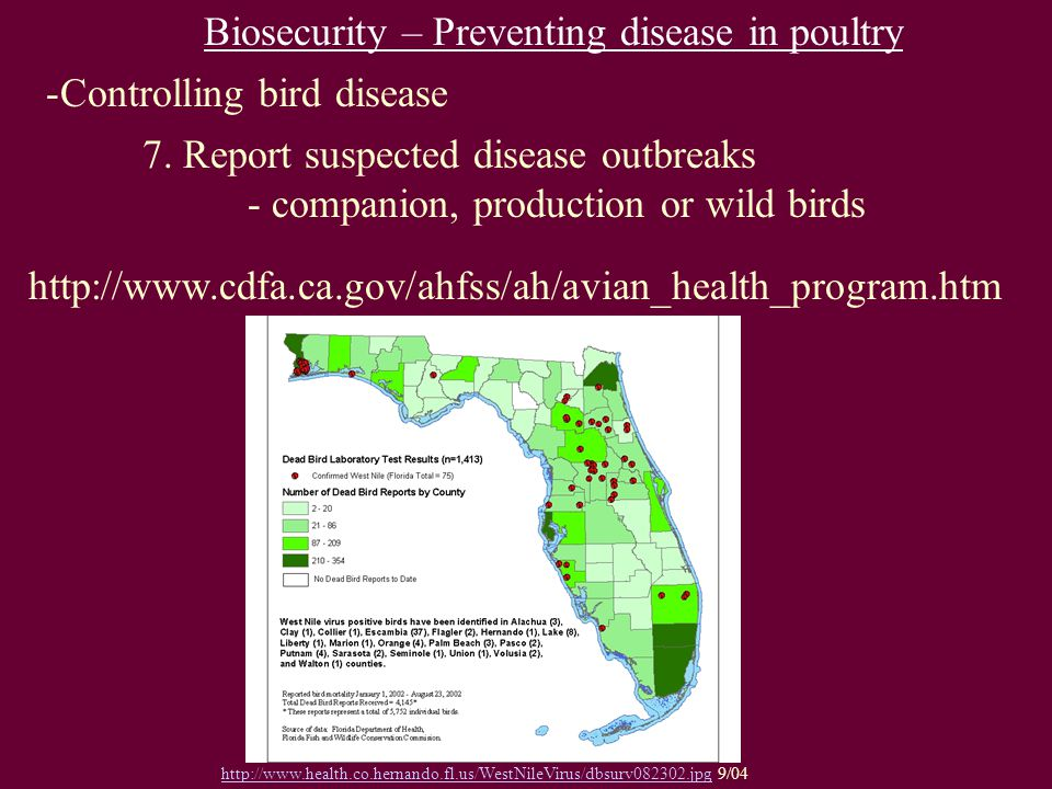http://www.cdfa.ca.gov/ahfss/ah/avian_health_program.htm Biosecurity – Preventing disease in poultry -Controlling bird disease 7.