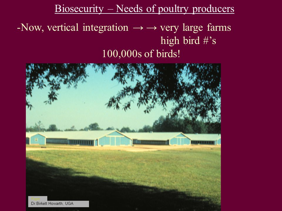 Biosecurity – Needs of poultry producers -Now, vertical integration → → very large farms high bird #'s 100,000s of birds.