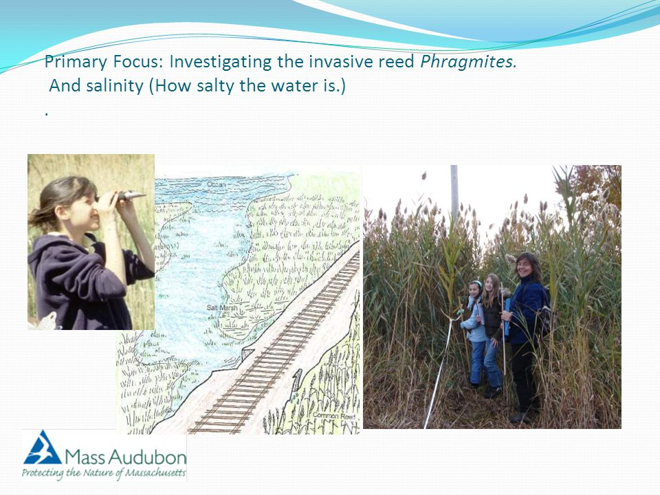 Primary Focus: Investigating the invasive reed Phragmites. And salinity (How salty the water is.).