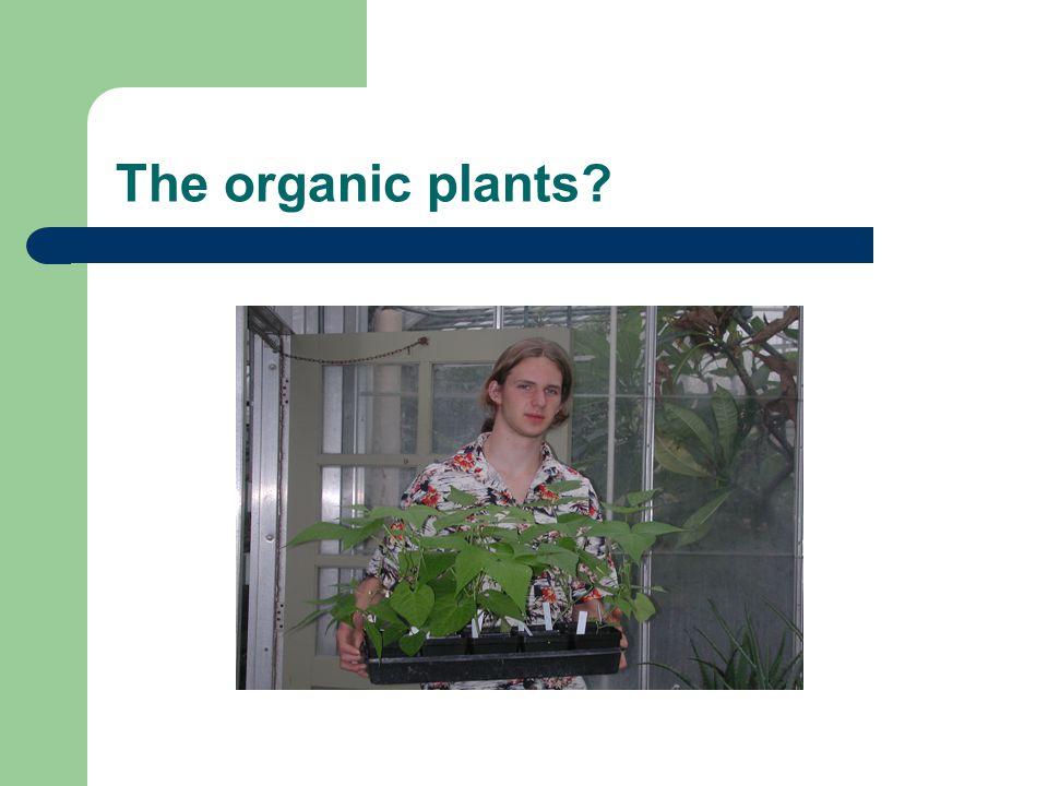 The organic plants