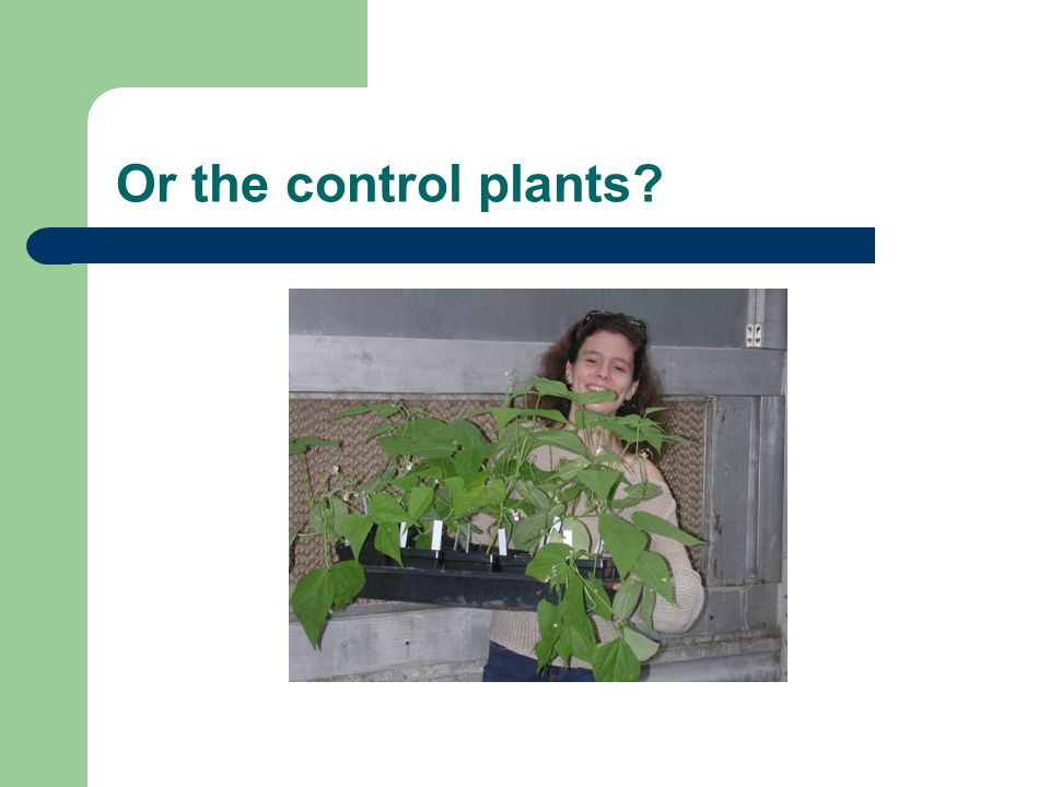 Or the control plants