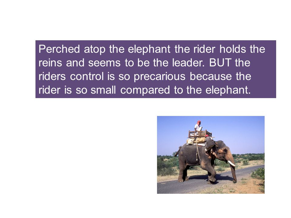 Anytime the 6 ton elephant and the rider disagree about direction for long.....