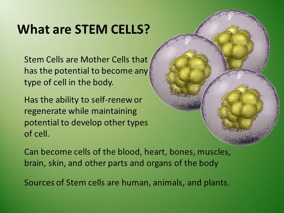 What are STEM CELLS.