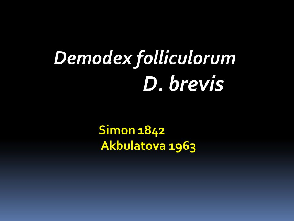 Demodex folliculorum D. brevis Simon 1842 Akbulatova 1963