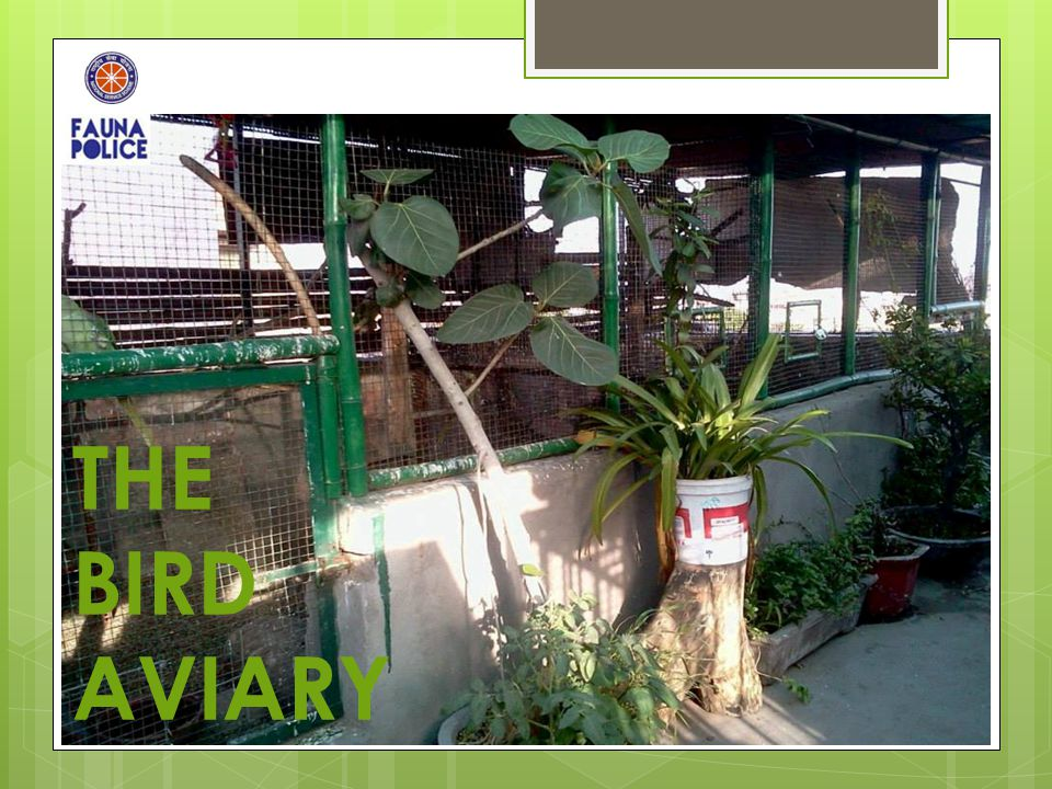 THE BIRD AVIARY