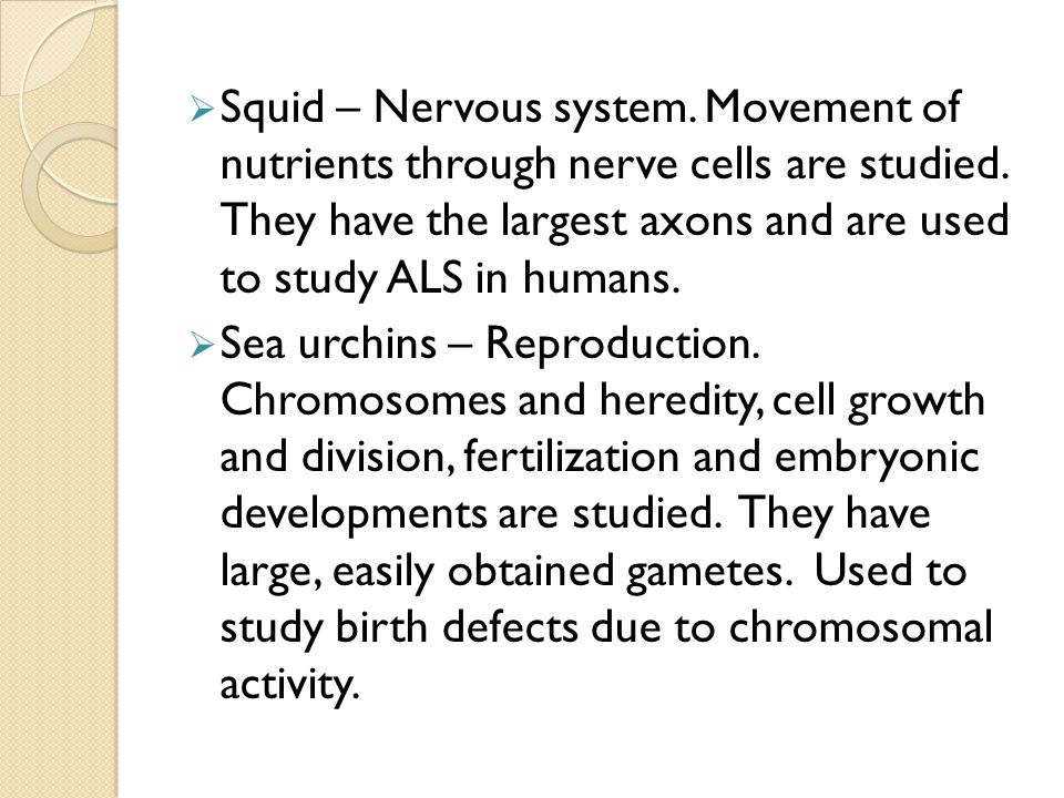  Squid – Nervous system. Movement of nutrients through nerve cells are studied. They have the largest axons and are used to study ALS in humans.  Se