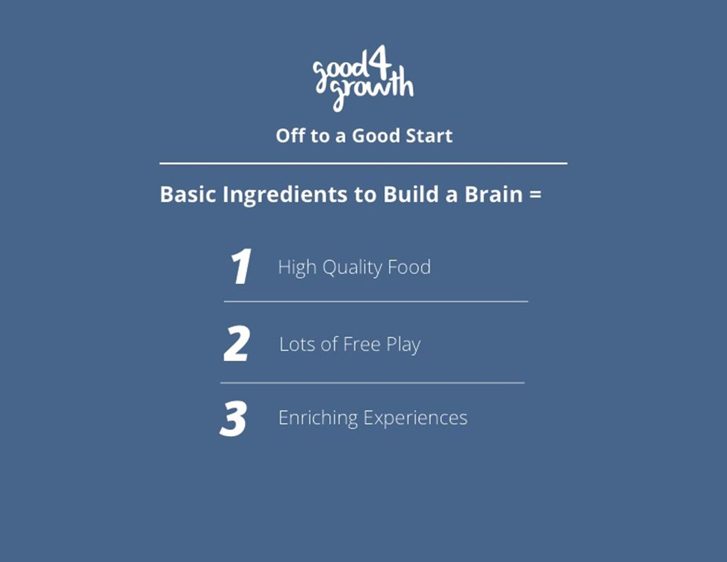 Off to a Good Start Basic Ingredients to Build a Brain = Lots of Free Play Enriching Experiences 1 2 3 High Quality Food
