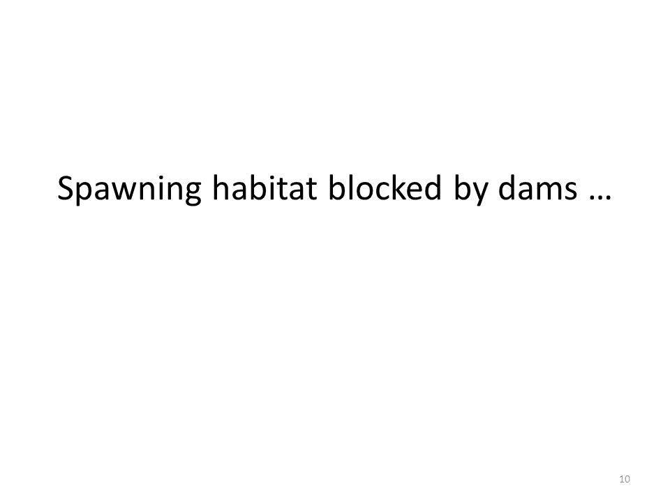 Spawning habitat blocked by dams … 10