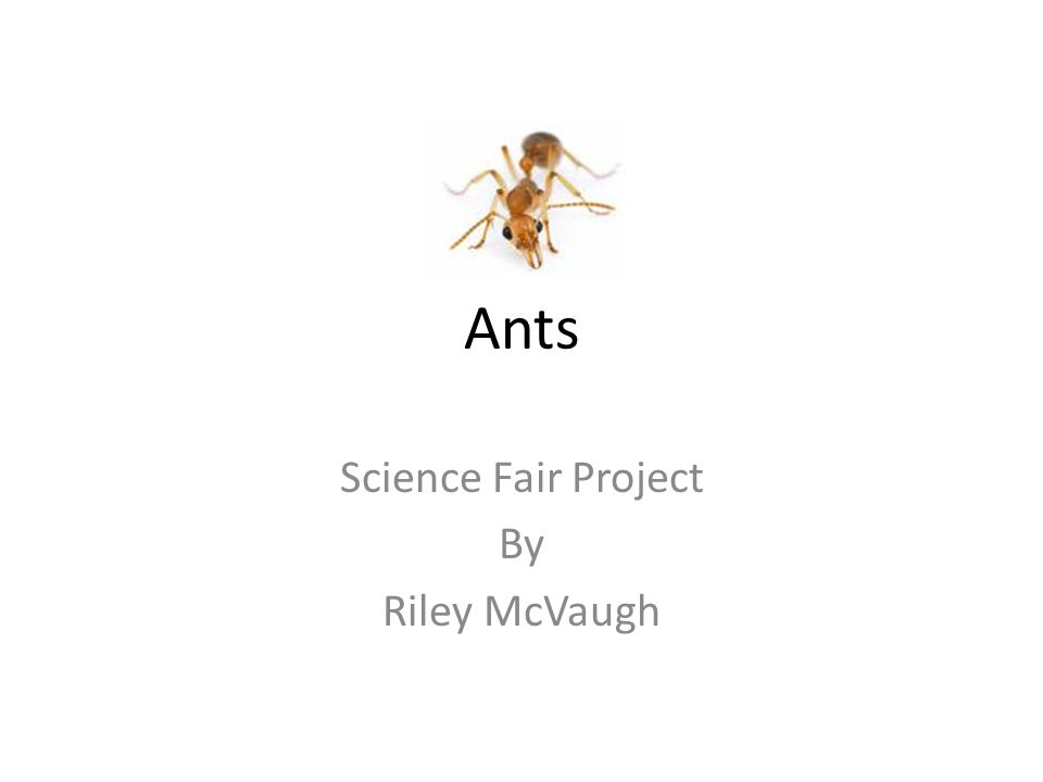 Ants Science Fair Project By Riley McVaugh