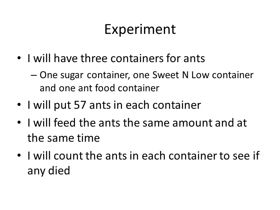 Conclusion – New questions I have are: Do ants eat dead ants.