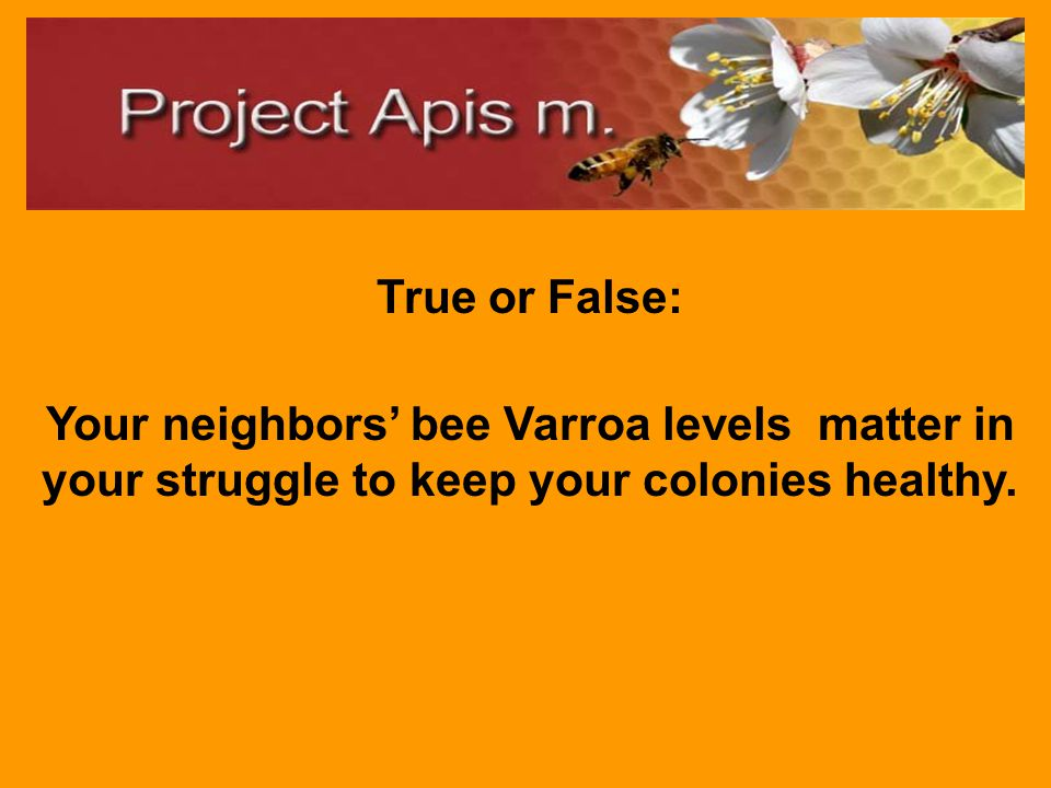 False: A stronger colony in summer give the mites a healthier setting to reproduce in very high numbers.