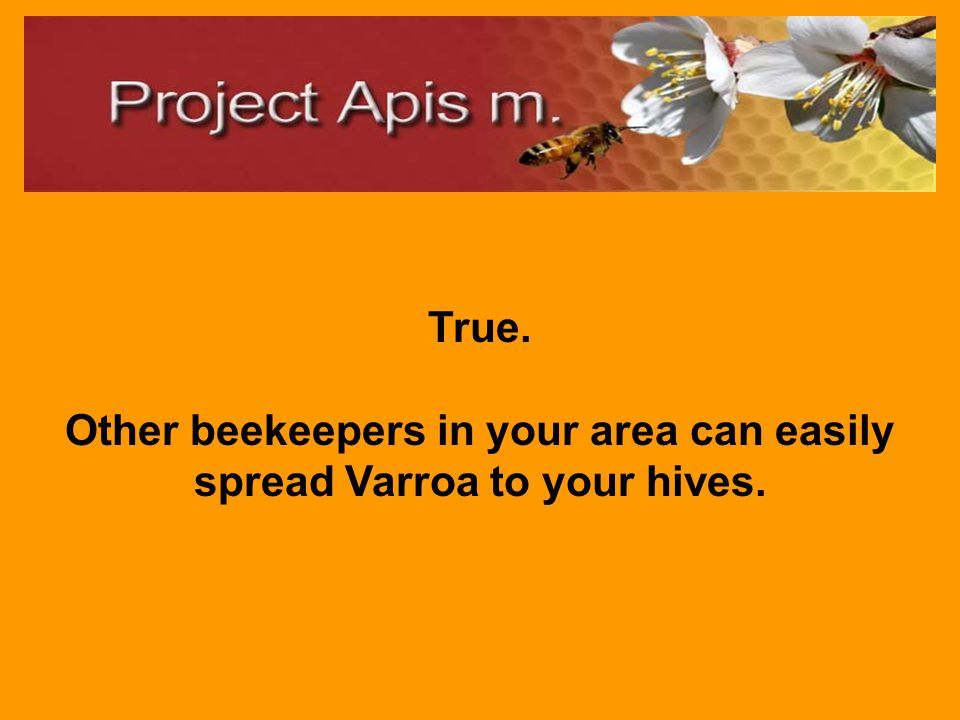 True or False: Your neighbors' bee Varroa levels matter in your struggle to keep your colonies healthy.