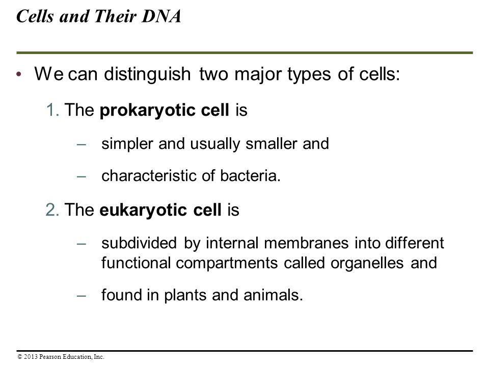 We can distinguish two major types of cells: 1.The prokaryotic cell is –simpler and usually smaller and –characteristic of bacteria. 2.The eukaryotic