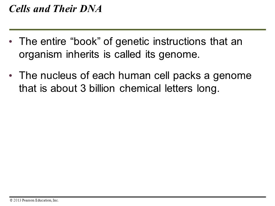 """The entire """"book"""" of genetic instructions that an organism inherits is called its genome. The nucleus of each human cell packs a genome that is about"""