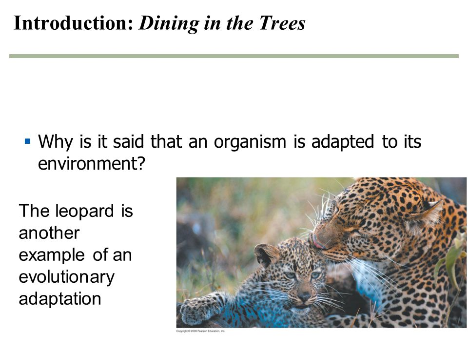 Introduction: Dining in the Trees  Why is it said that an organism is adapted to its environment? The leopard is another example of an evolutionary a