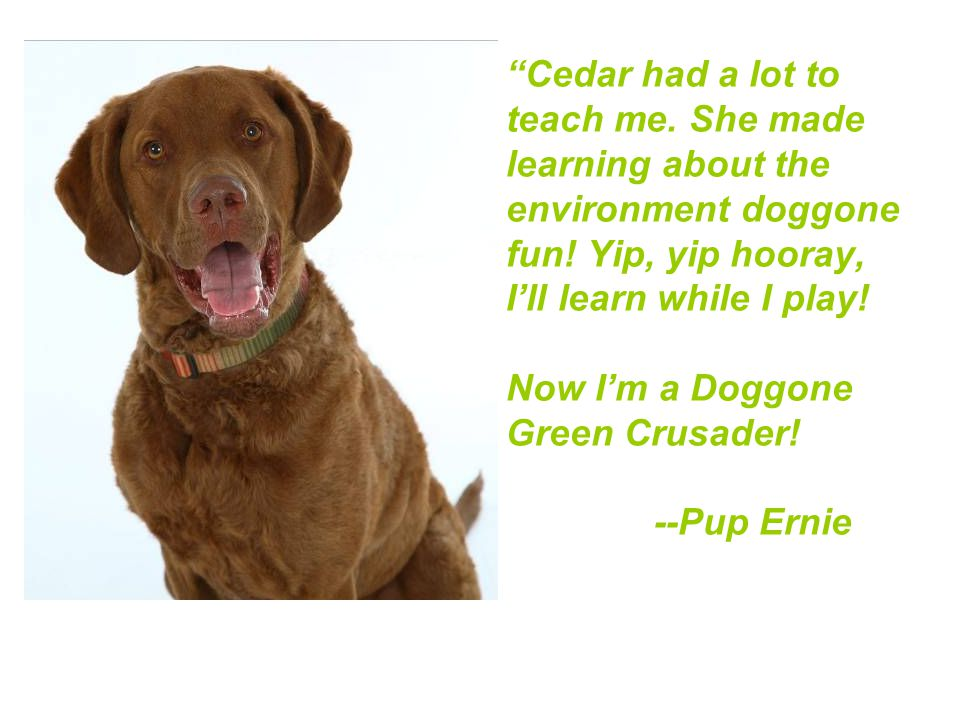 Cedar had a lot to teach me. She made learning about the environment doggone fun.