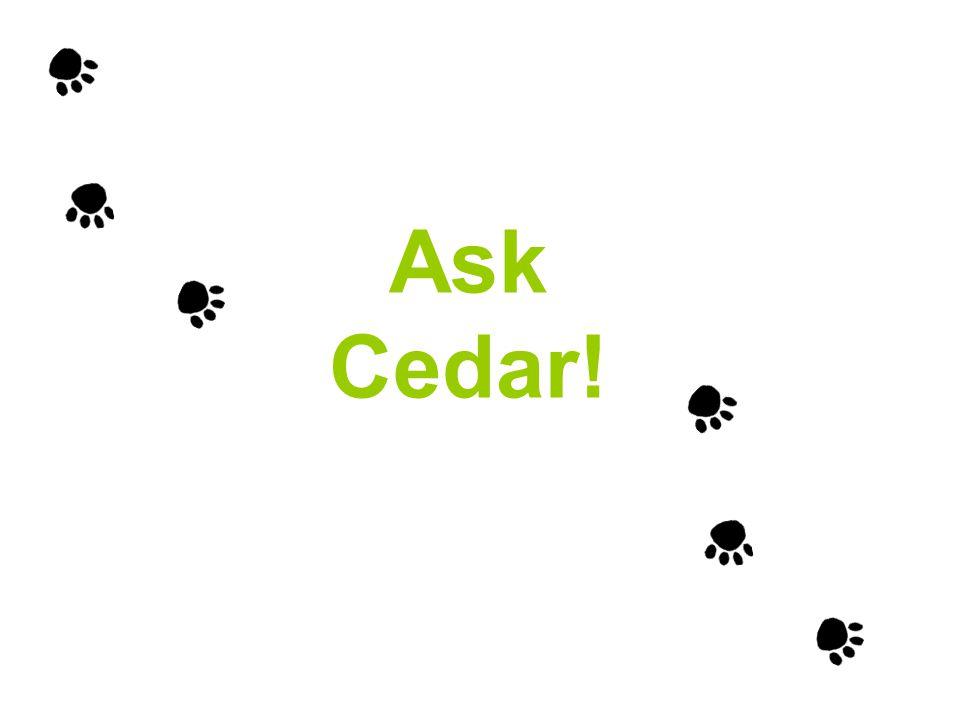 Ask Cedar!