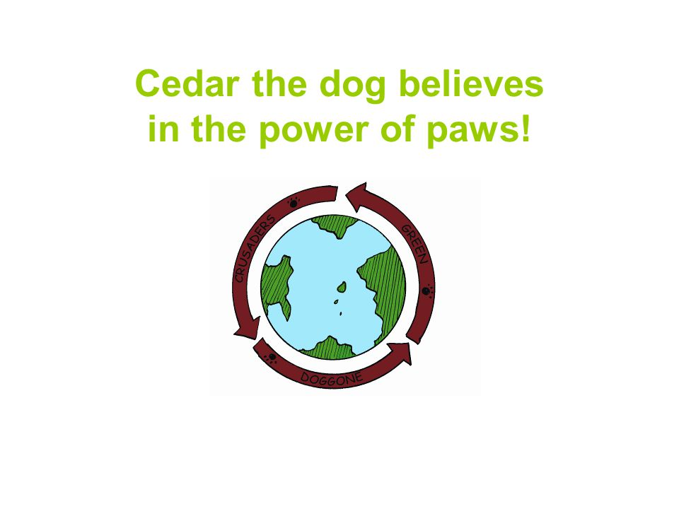 Cedar the dog believes in the power of paws!