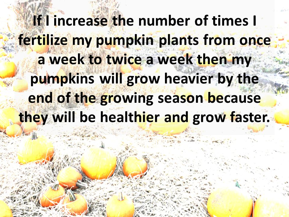 Your hypothesis might look like this: If I increase the number of times I fertilize my pumpkin plants from once a week to twice a week then my pumpkins will grow heavier by the end of the growing season because they will be healthier and grow faster.