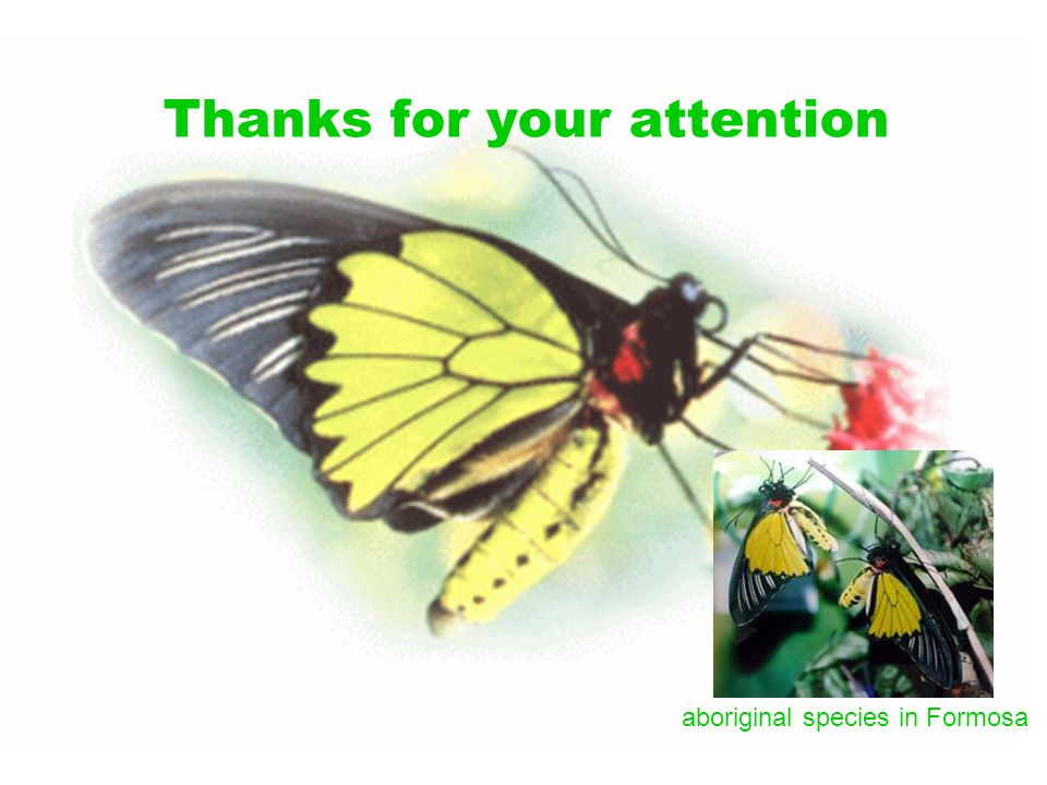 Thanks for your attention aboriginal species in Formosa