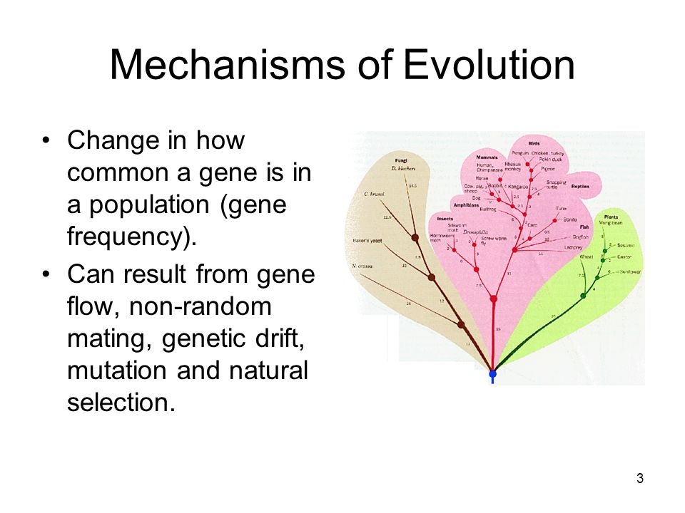 3 Mechanisms of Evolution Change in how common a gene is in a population (gene frequency).