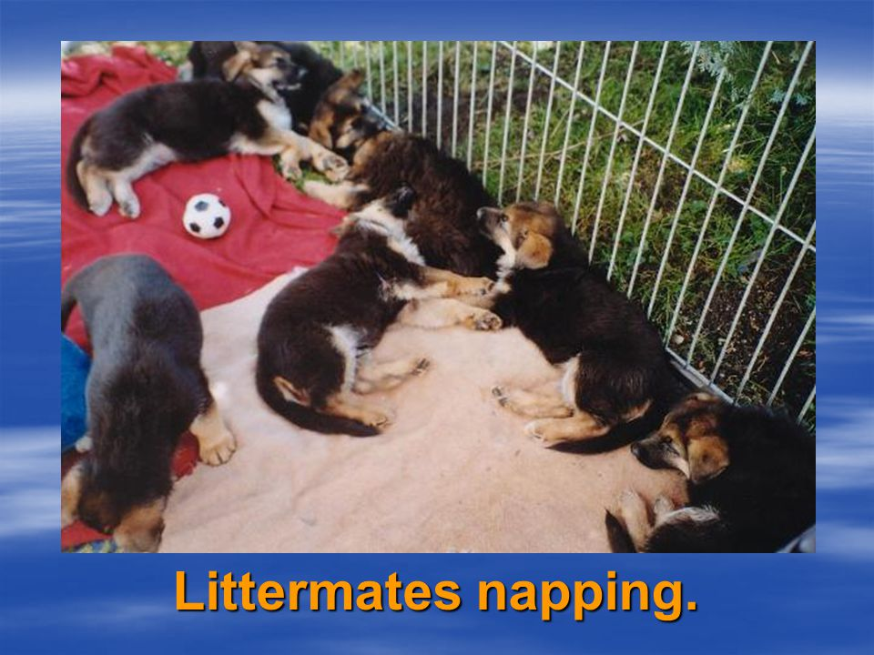 Littermates feeding...