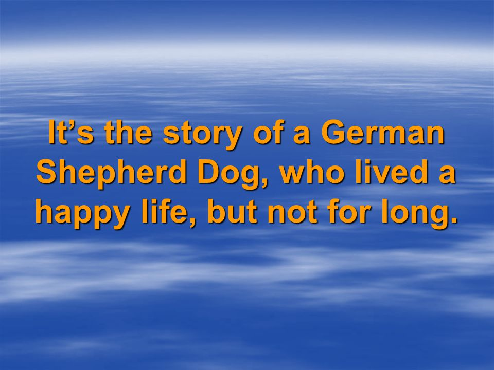 April 3rd 2004, at a Judgement Day for GSDs, Indiana receives an excellent written report by SV-Judge Roland Dierendonck.