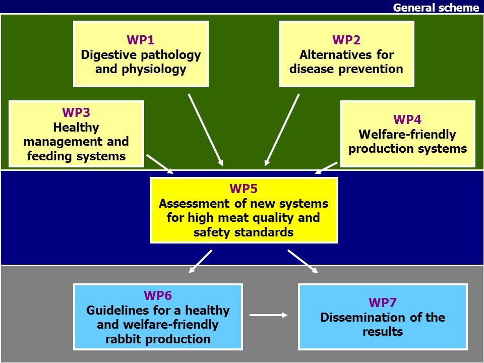 WP1 Digestive pathology and physiology WP2 Alternatives for disease prevention WP3 Healthy management and feeding systems WP4 Welfare-friendly product