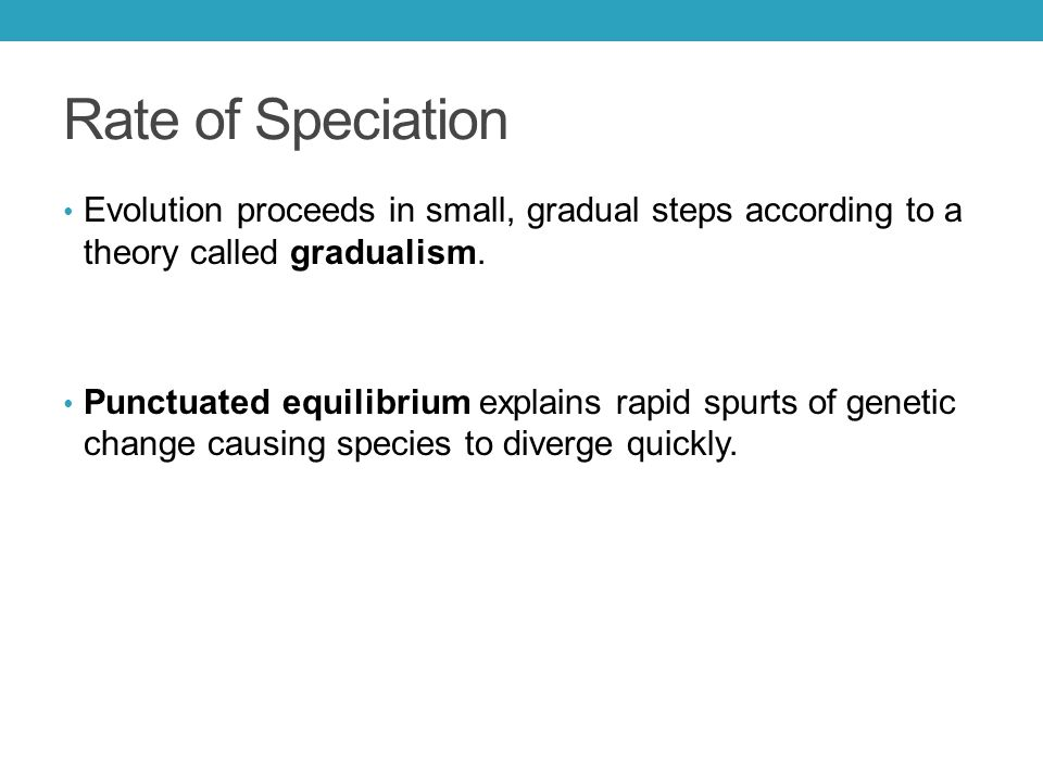 Rate of Speciation Evolution proceeds in small, gradual steps according to a theory called gradualism. Punctuated equilibrium explains rapid spurts of