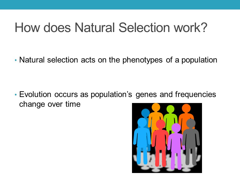 How does Natural Selection work.