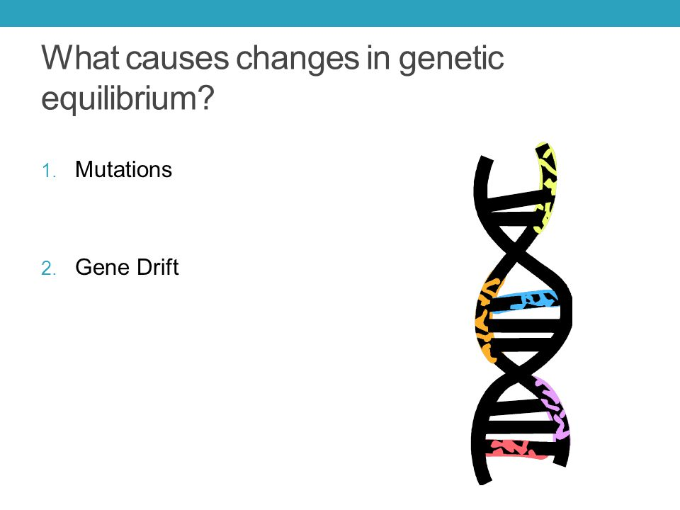 What causes changes in genetic equilibrium? 1. Mutations 2. Gene Drift