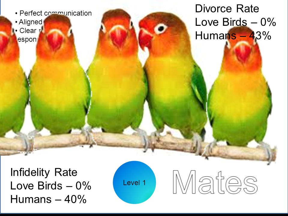Level 1 Perfect communication Aligned goals Clear roles and responsibilities Infidelity Rate Love Birds – 0% Humans – 40% Divorce Rate Love Birds – 0% Humans – 43%