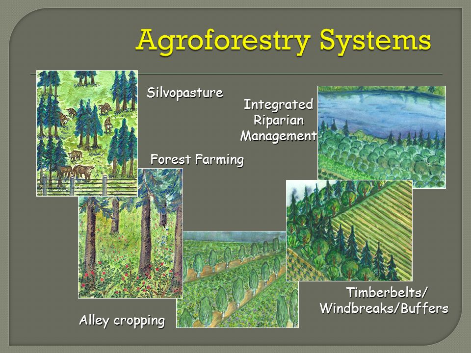 Timberbelts/Windbreaks/Buffers Integrated Riparian Management Alley cropping Silvopasture Forest Farming